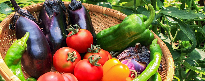 直売所ならではの、新鮮な野菜が盛りだくさん。地元野菜も多数。